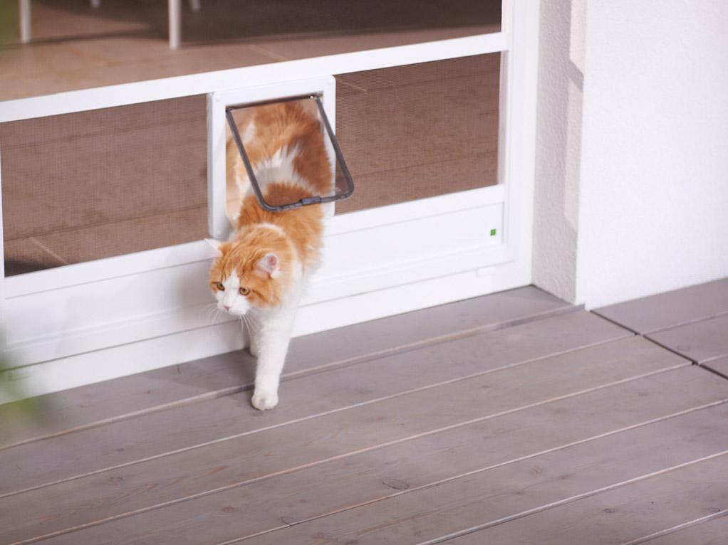 Katze durch Katzenklappe